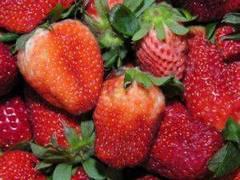 Fresas para mascarilla anti frizz para el cabello erizado